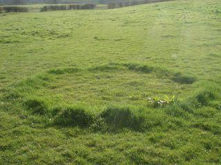Rond de sorcière dans une prairie