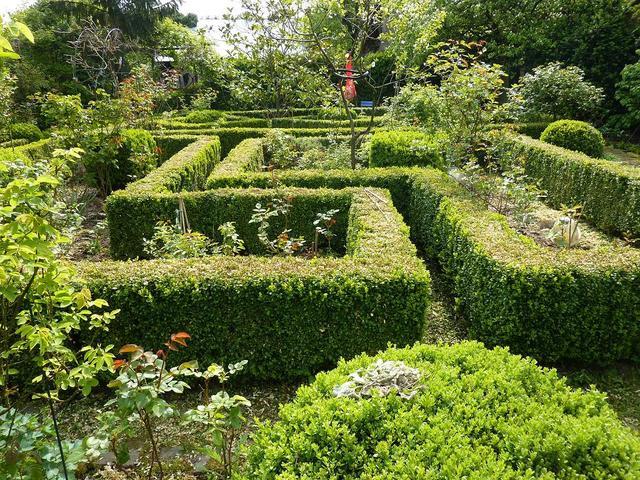 Les bordures de buis, reines des jardins de presbytère (Créer un jardin de curé)