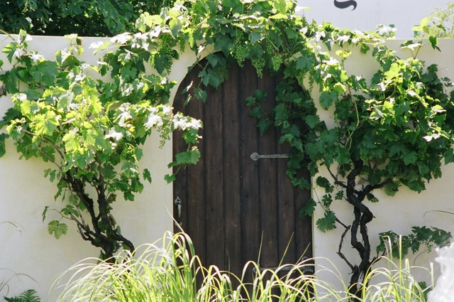 La vigne, une plante symbolique (Créer un jardin de curé)