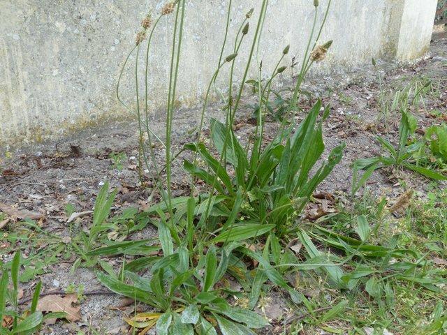 Top Mauvaises herbes : que faire ? CX45