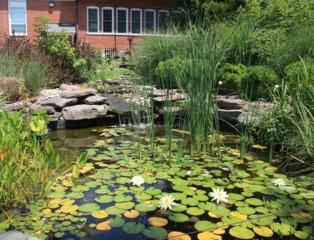 Bassin b ton tout - Plantes de terrasse exterieur ...