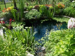 Bassin et plantes aquatiques ou de berges