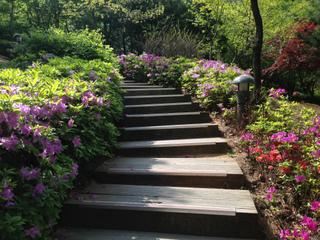 Azalées plantées aux abords d'un escalier