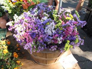 Bouquet de statices de différentes couleurs