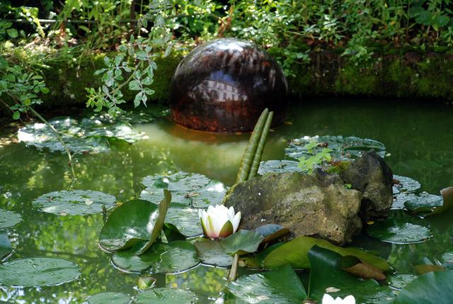 Plantes aquatiques incontournables pour le bassin for Plante aquatique bassin exterieur