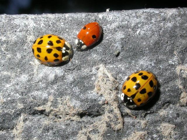 Les insectes du jardin : utiles, indésirables, étonnants...