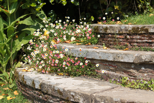 Fleurir un escalier for Savoir composer un beau jardin