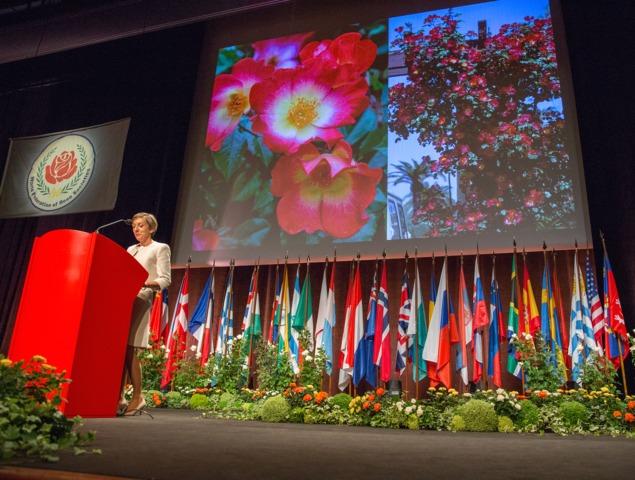 Rosier Cocktail® de Meilland, primé au Congrès Mondial des Roses à Lyon