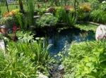 Les plantes aquatiques incontournables au bassin d'ornement