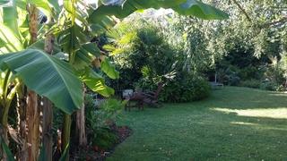 La végétation luxuriante au jardin exotique de Cosy Home