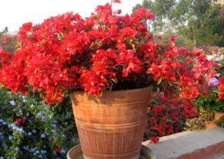 Fleurir un balcon ou une terrasse ensoleillés