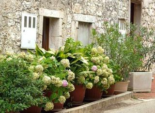 Cultiver un hortensia en pot : variétés adaptées, entretien