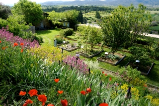 Vue du jardin des plantes tinctoriales