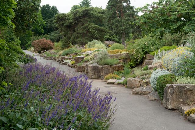 Plantes grasses dans une rocaille jardins secs et rocailles - Image de rocaille ...