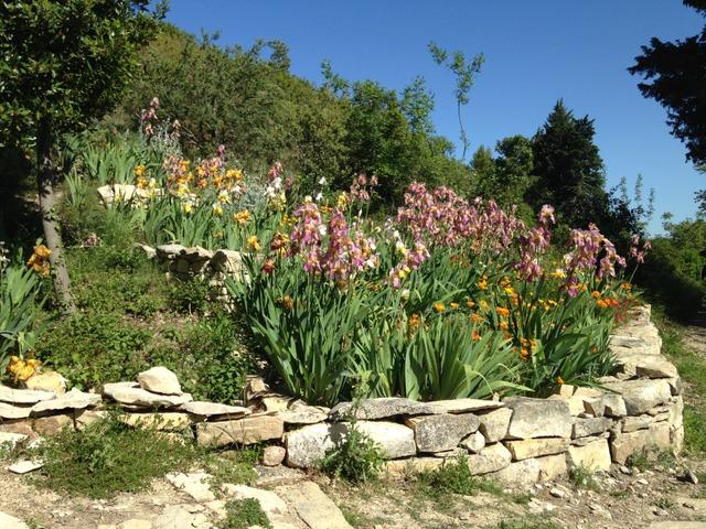 Rocaille - Iris