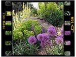 Jardins secs et rocailles