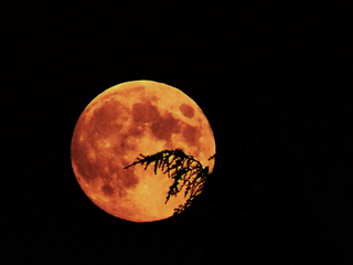 C'est quoi la lune rousse ?