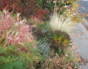 Graminée (Stipa tenuissima) et vivaces en automne
