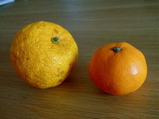 Yuzu à gauche, mandarine à droite