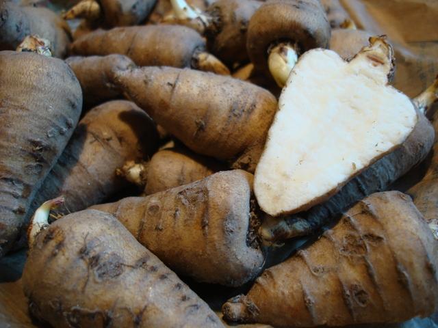 Cerfeuil tubéreux : semer, cultiver, récolter