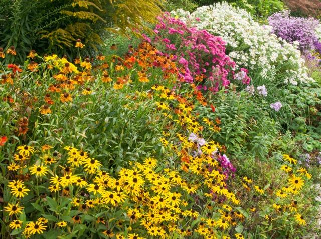 Les floraisons d'automne : pour un décor d'été prolongé