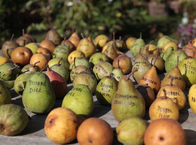 Guide des variétés de poires : quel poirier choisir ?
