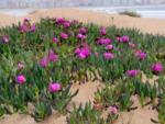 Plantes résistantes aux embruns