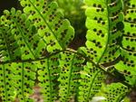 Comment se reproduisent les plantes qui n'ont pas de fleurs ?