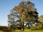 Les arbres - fiches pratiques