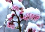 Un jardin fleuri en hiver