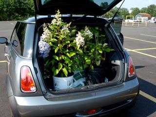 Que faire d'une plante juste après l'achat ?