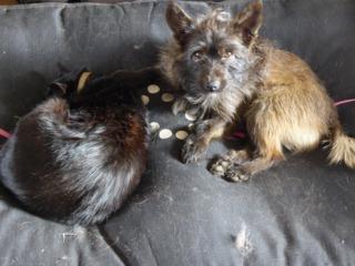 Chute des poils chez le chien : causes, traitement