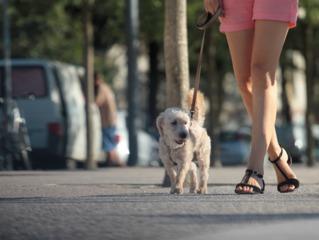 Chien : lui apprendre à marcher en laisse