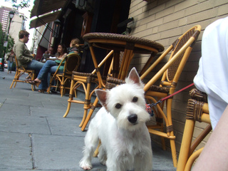 Chien à la terrasse d'un café