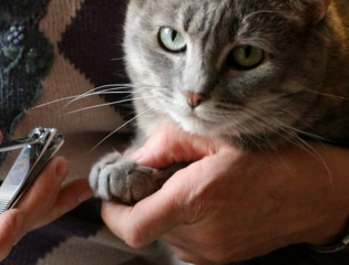Chat maison tout - Comment couper les griffes de son chat ...