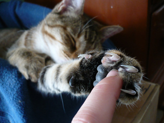 Griffes de chat nécessitant d'être coupées