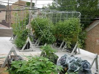 Potager urbain / greenroofgrower