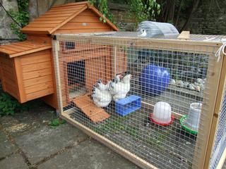 Que faire de vos poules pendant les vacances ?