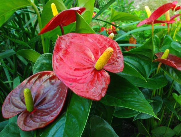 plante tropicale maladie