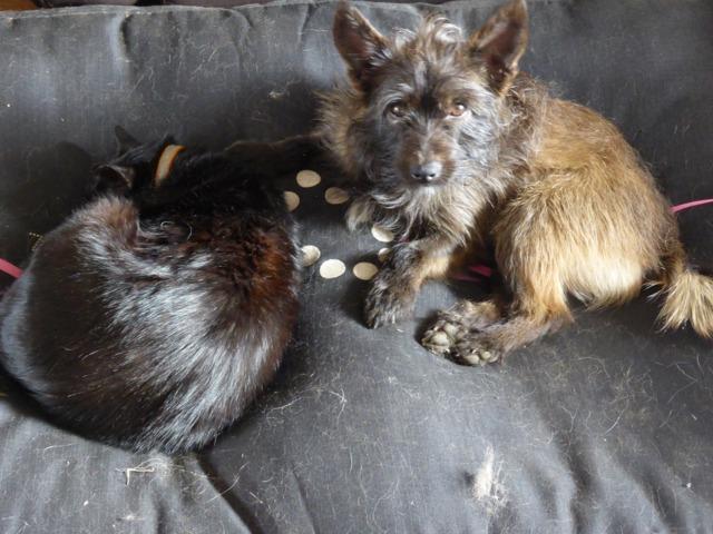 La mue des poils chez le chat - Perte de poils chez le chat ...