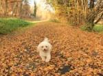 Promenade avec un chien : les bons réflexes