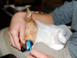 Votre chien a mauvaise haleine, que faire ?