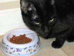 Votre chat a un appétit difficile, que faire ?