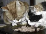 Comment nourrir votre chat ?