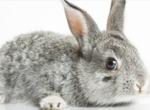 Quelles races de lapins pour débuter un élevage ?