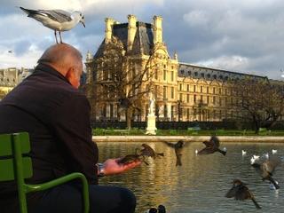 Oiseaux des villes : cohabitation avec l'homme
