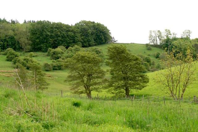 Aulne : plantation, culture et variétés