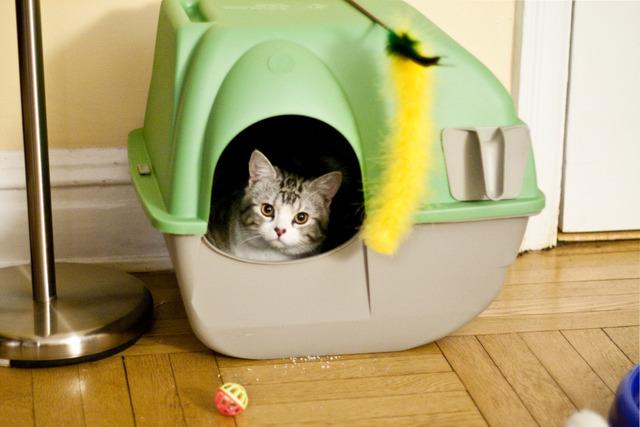 Problème de propreté chez le chat : que faire ?