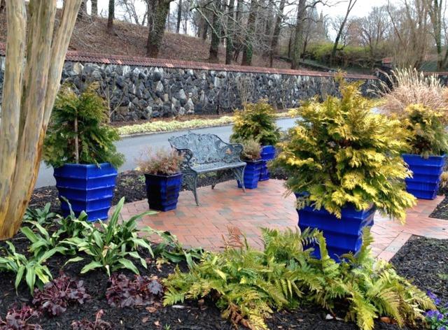 Conifères dorés dans des pots colorés (Des jardins beaux en hiver)