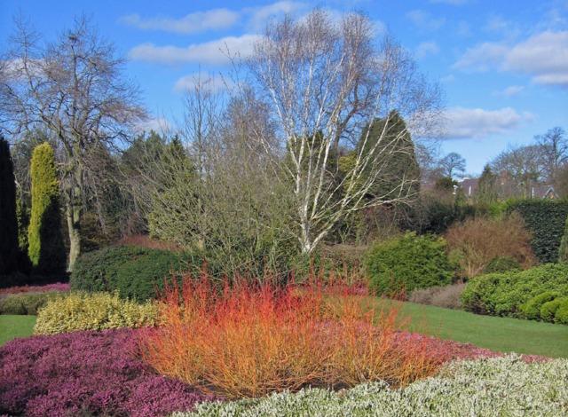Cornus alba et bruyère (Des jardins beaux en hiver)